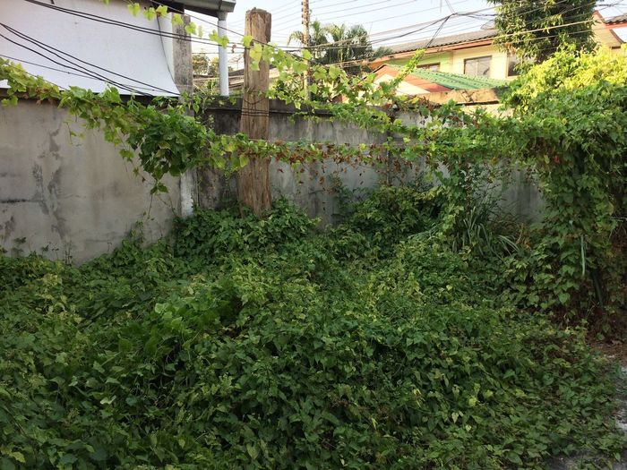 Just my home… Thailand Bangkok Plant Building Exterior Growth Green Color Architecture Built Structure Nature Day Building Ivy Creeper Plant Overgrown Residential District Leaf Plant Part Wall - Building Feature Tree Outdoors No People