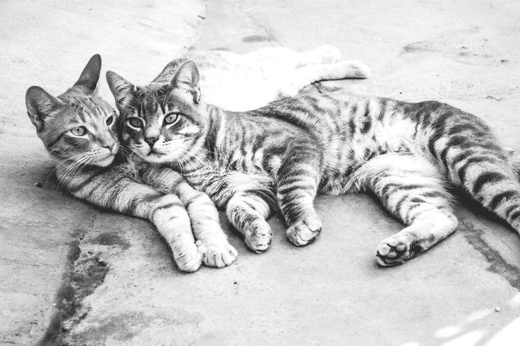 Blackandwhite Couple Love Pets Cat Peru Pets Corner