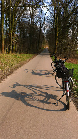 Alone Bicycle Bäume Celebrate Your Ride Day Empty Fahrrad Getting Away From It All On The Road Outdoors Relaxing Moments Road Schattenspiel  Shadows & Lights Sunny And Cold Day The Way Forward Trees And Sky Wege Und Strassen