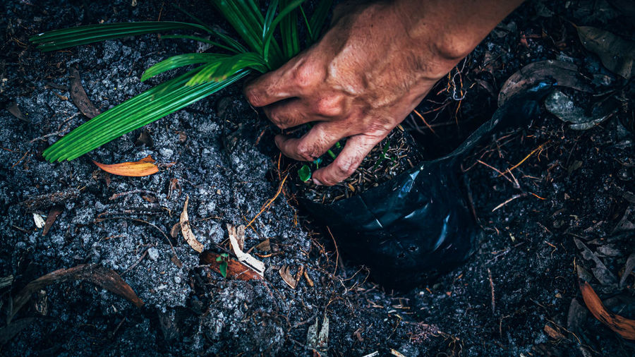 High angle view of hands holding sapling in wet field