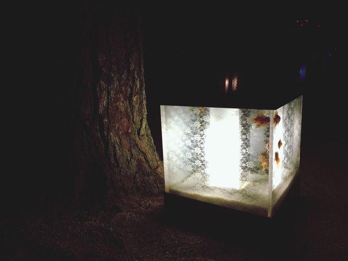 Art Aquarium 2014 Goldfish Fantastic Exhibition Night Lights