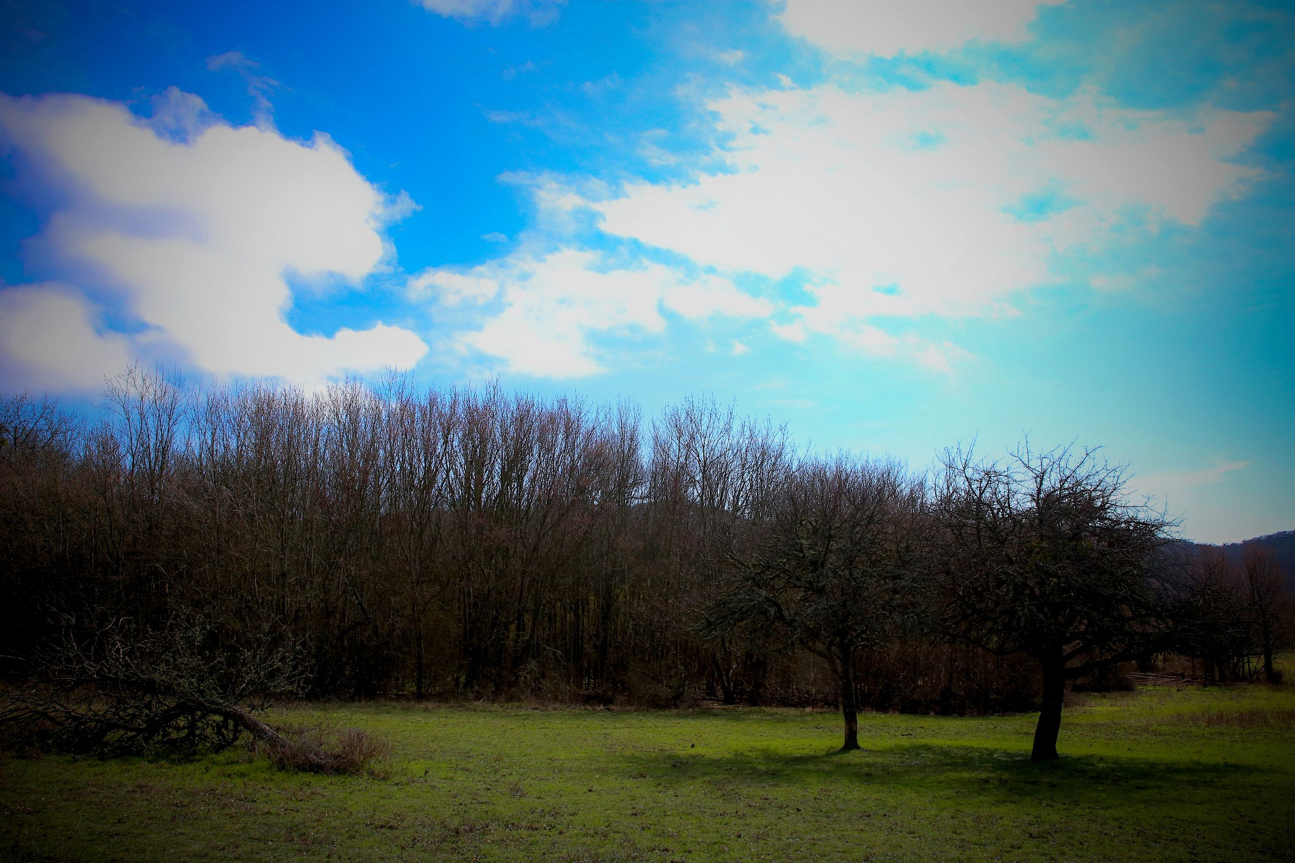 sky, cloud - sky, tree, nature, no people, outdoors, day, scenics, grass, beauty in nature, freshness