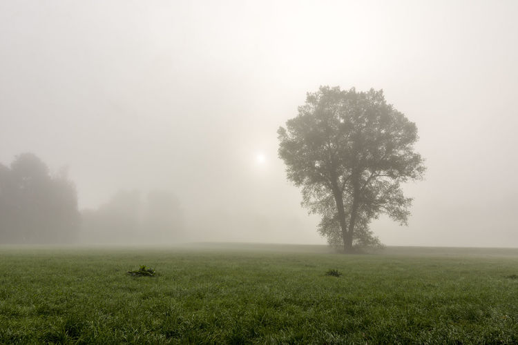 Foggy morning ARTsbyXD EyeEm Best Shots EyeEm Nature Lover Nebel Beauty In Nature Day Field Fog Grass Landscape Lone Nature No People Outdoors Scenics Sky Tranquil Scene Tranquility Tree