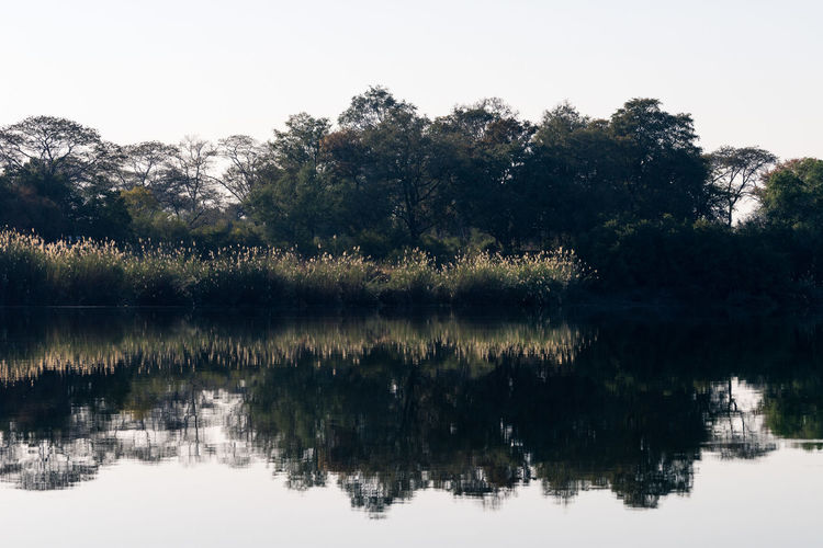 Beauty In Nature Dawn Grasses Grasses And Sun Morning Nature Patterns In Nature Reflection Riverfront Symmetry Tranquil Scene Tranquility Tree Water