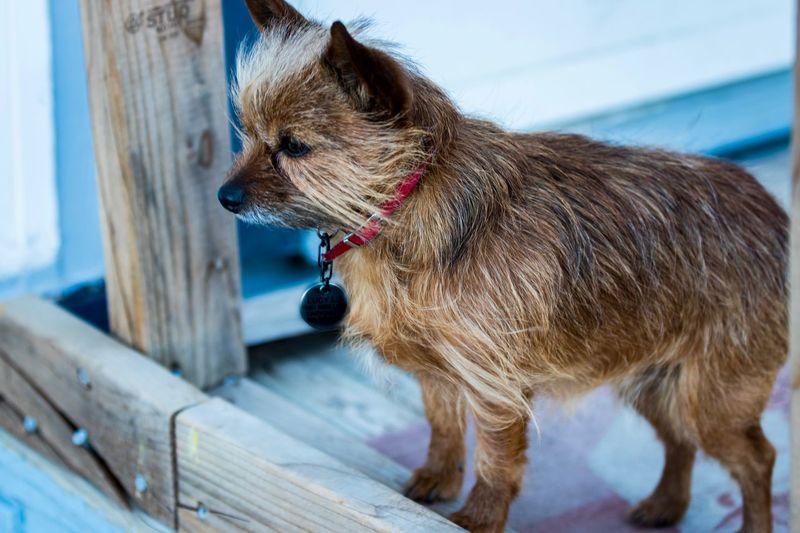 EyeEm Selects Pets One Animal Domestic Animals Dog Animal Themes Mammal Close-up