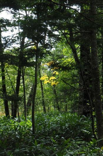 岳沢湿原 TreePorn Colors Of Autumn Nature_collection EyeEm Nature Lover EyeEm Best Shots - Nature