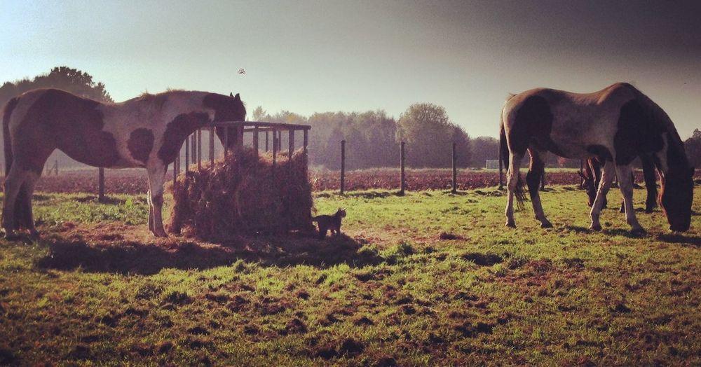 Horses My Horse