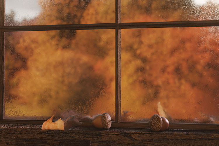 misty windows of a wood cabin in front of autumn trees Autumn Misty Window Morning Nature Trees Wooden Hut Acorns Close Up Fall Foliage Forest Glass Leaf Leaves Nature Outdoors Transparent Wet Window Windowsill Wood - Material Wood Cabin