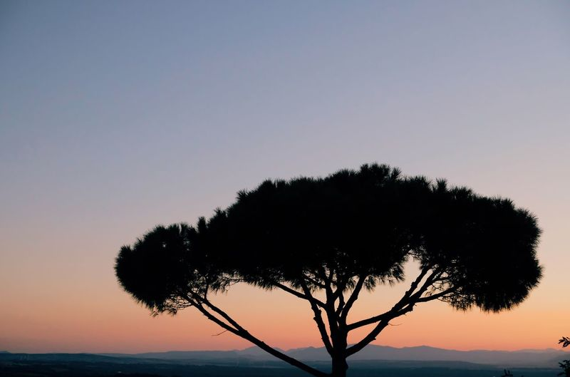 Sky Sunset Silhouette Tree Plant Beauty In Nature Tranquility Scenics - Nature Tranquil Scene Growth Nature Copy Space Orange Color No People Clear Sky Outdoors Idyllic Non-urban Scene Branch Capture Tomorrow