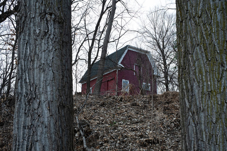 Bare tree by abandoned building in forest