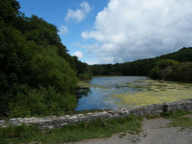 Beauty In Nature Cloud - Sky Day Grass Green Color Landscape Lily Lily Pools Nature No People Outdoors Pembrokeshire Pembrokeshire Coast Pembrokeshire Coastal Path River Scenics Sky Stackpole Tree Water