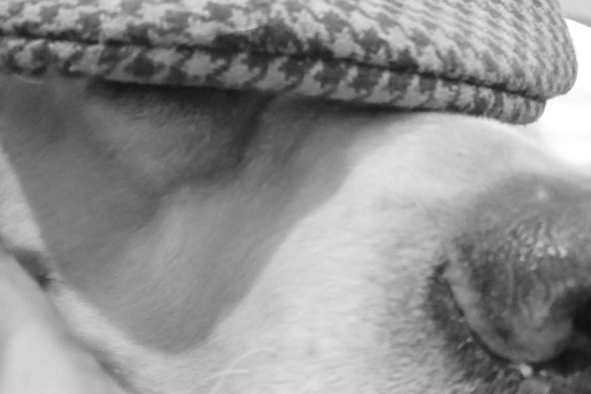 My Dog Detective Hat Close-up Streamzoofamily EyeEm Photography Black & White Blackandwhite Home Close-up Labrador Retriever