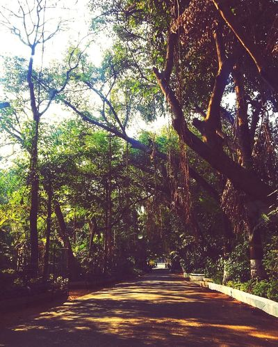 Road Resort Nature Peace And Quiet Peaceful View Photography MumbaiDiaries