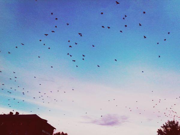 настроение осень птицы небо