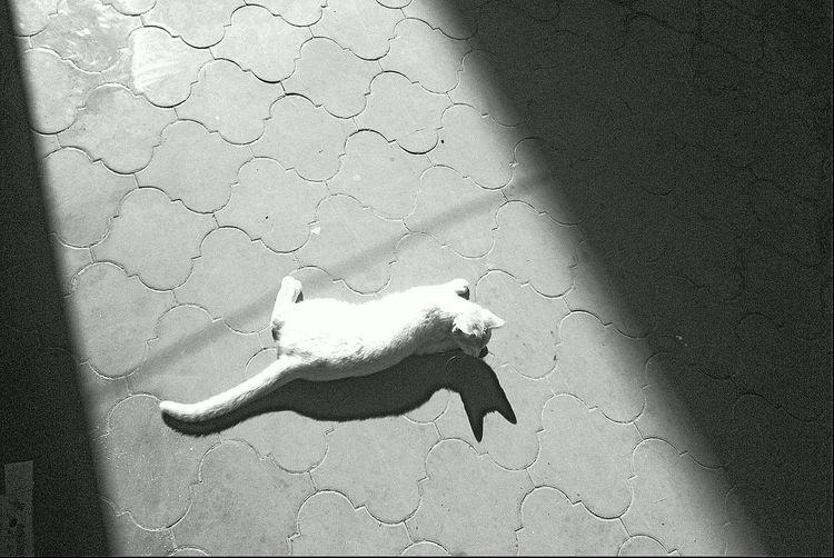 Shadow 13395056hadowss shsshadow EyeEmNewHere EyeEmNewHere
