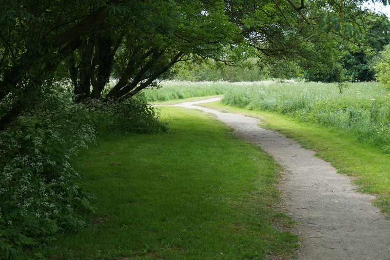 Green Green Green!  Green Color Green Colour Path Pathways Pathway Path Through The Green Green Trees Trees Trees Green Leaves Green Plant Floor Covering White Flowers