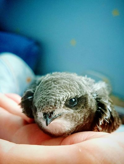 Cropped hand of person holding young bird