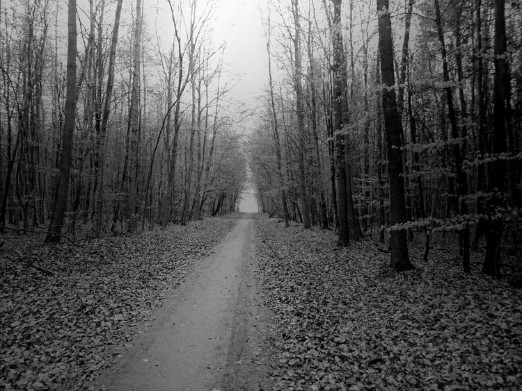 Forest Woods Way Black & White