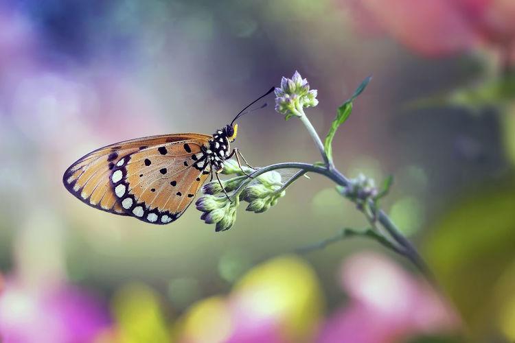 Beautiful and