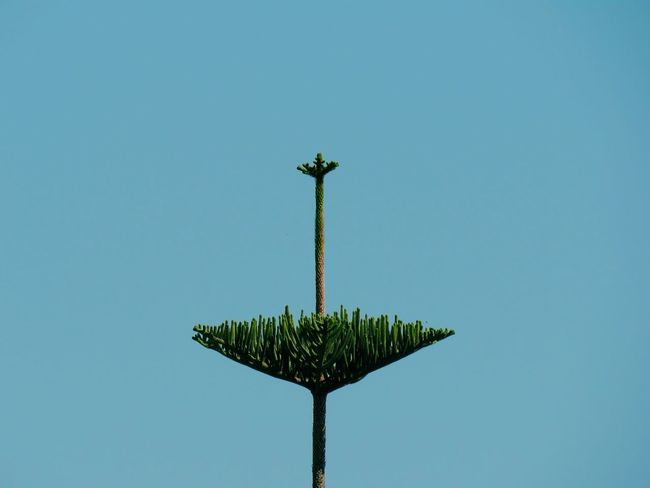 Sky Outdoors Palm Tree Symmetry Tree Day Low Angle View No People Nature Clear Sky Beauty In Nature View From Below Pattern Complexity Light And Shadow From My Point Of View Close-up Beauty In Nature Full Length Green Color Plant Minimalism Minimal