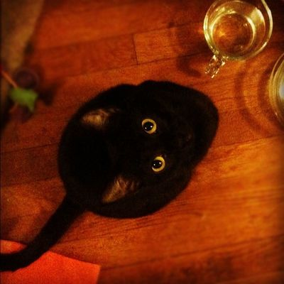 Catsofinstagram Kitty Instafy Instagram instadaily instalove picoftheday photoaday