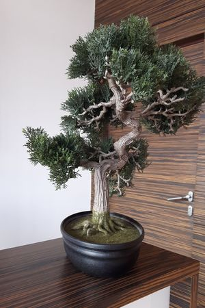 Bonzai Day Door Fake Tree Green Color Growth Home Interior House No People Plant Plastic Tree Pot Tree Wall Wood - Material Wooden Texture Interior Views Showcase March