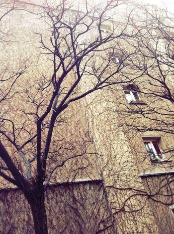 tree art in Berlin Tree Art