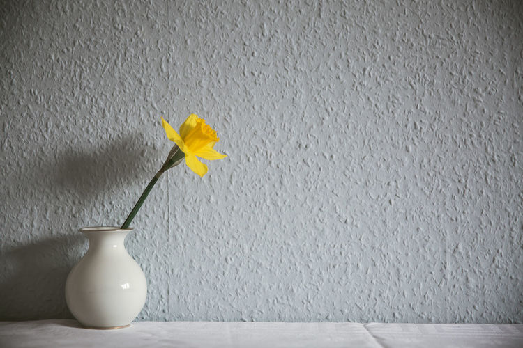 Close-up of yellow flower against wall