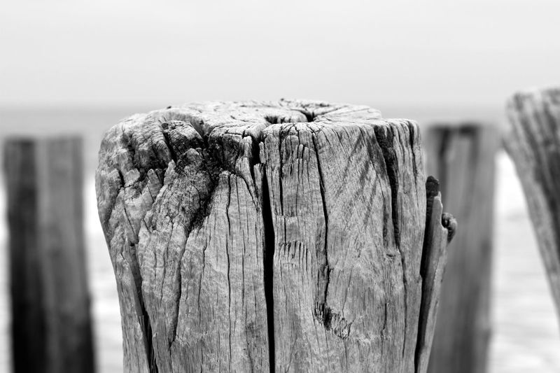 Close-up of wood at beach