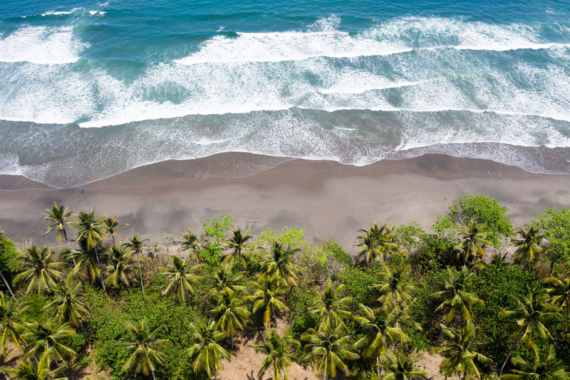 Aerial view of trees by sea shore