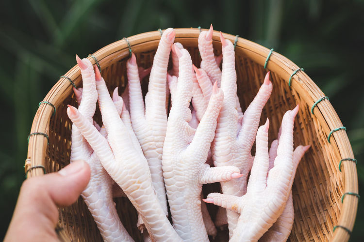 Close-up of hand holding fish in basket