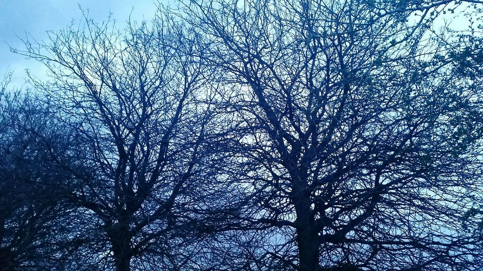 Blue 2 Londonfields Trees Evening Blue No Filter Eastlondon