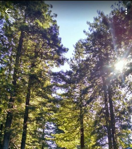 Outside Photography EyeEm Nature Lover Taking Photos California Redwoods Redwood Trees Nature Photography Beautiful Nature Amazing Creation Nature Check This Out