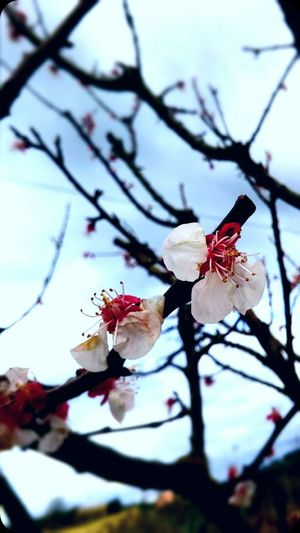 Flower Primavera Beautiful Nuvoloso Albero Tree