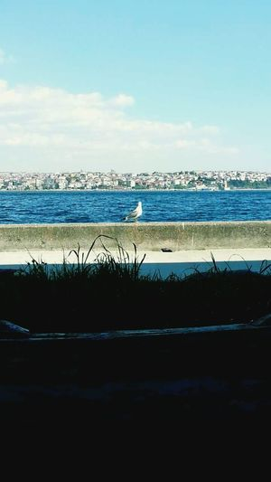 Freedom Sea Boshphorus Istanbul #turkiye Seagull University Break