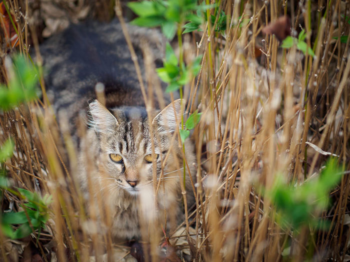 Close-Up Of Cat In Tall Grass