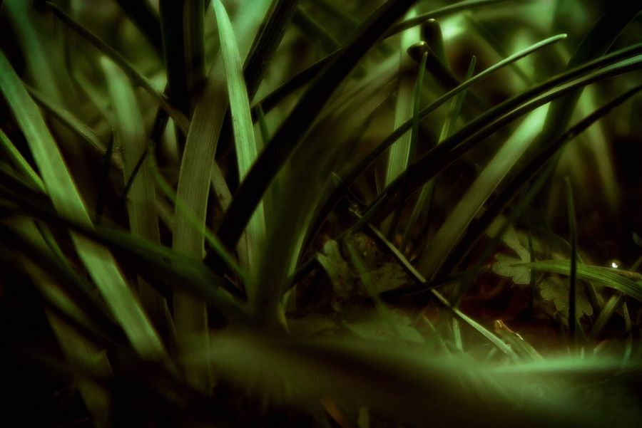 Urban 4 Filter Low Key Grass Grassy Beauty In Nature Beautiful Nature Nature Green Golden Gently Weed Directly Above Close-up Close Up Wonderful Nature Beautiful Darkness And Light Getting Creative EyeEm Gallery