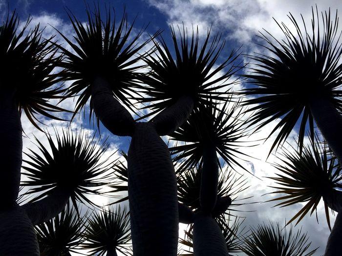 Einfach so... Tadaa Community Tadaa EyeEm Nature Lover EyeEm Best Shots Eyem Nature Silhouette Landscape_Collection