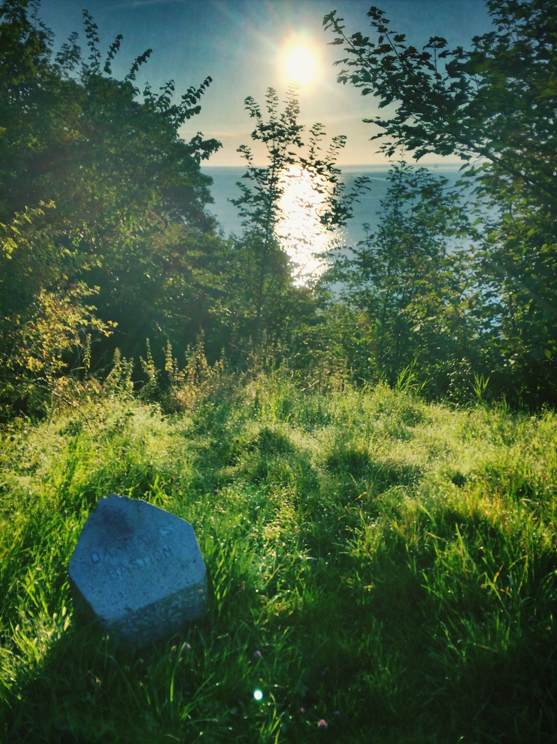grass, grassy, field, green color, tranquility, sunlight, growth, tree, sun, nature, tranquil scene, beauty in nature, sky, lens flare, landscape, sunbeam, scenics, day, plant, sunny