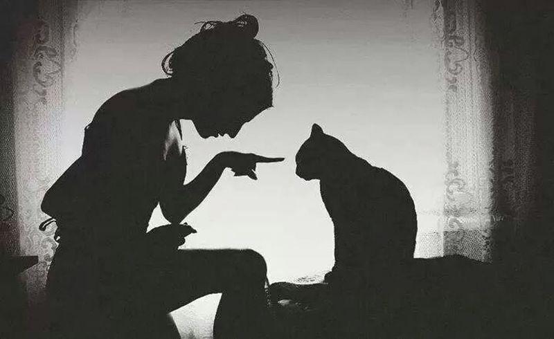 ♡♡ Blackandwhite Black Cat People Watching