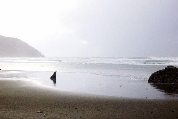 Beach Seal Secret Places