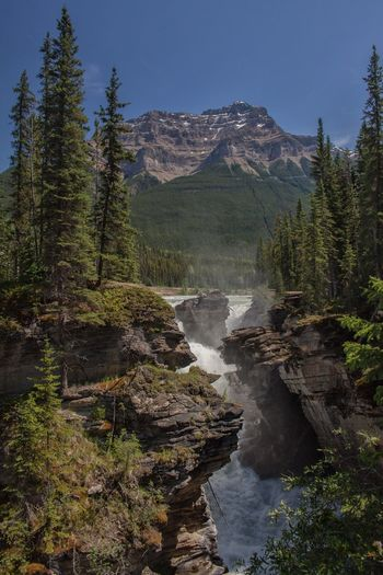 athabasca falls in Canada Canadian Rockies  Nature Photography Beauty In Nature Environment Flowing Flowing Water Forest Land Landscape Long Exposure Motion Mountain Nature No People Non-urban Scene Outdoors Power In Nature Scenics - Nature Sky Tranquil Scene Tranquility Tree Water Waterfall Waterfalls