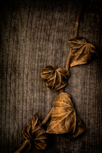 Autumn Close-up Day Dried Plant Dry Food Freshness High Angle View Indoors  Leaf No People Plant Studio Shot Textured  Wood - Material