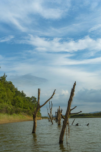 Beauty In Nature Cloud - Sky Day Dead Tree Lake Nature No People Outdoors Scenics Sky Tranquil Scene Tranquility Tree Water