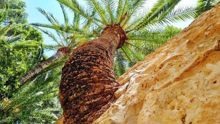 Low Angle View Tree Day No People Nature Growth Tree Trunk Outdoors Close-up Sky palm tree