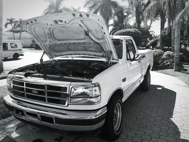 The Drive Betty Truck Black And White One Florida Boca Raton Contrast White Truck Car Transportation Land Vehicle Mode Of Transport No People Day Tree Outdoors Palm Trees