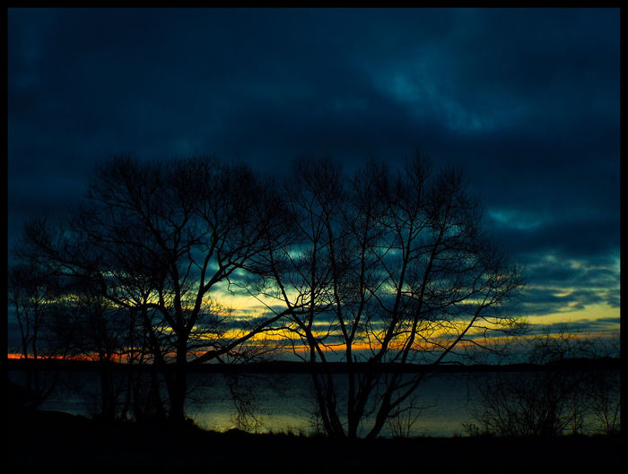 Silhouette of bare trees against cloudy sky