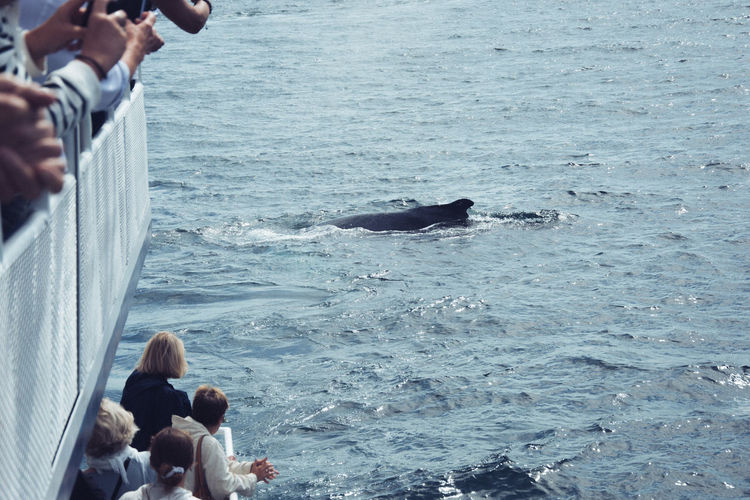 People whalewatching at sea
