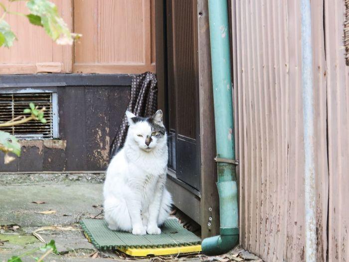 Stray Cat Cats Gato Funny Cat Animals at Enoshima 江の島 in Japan