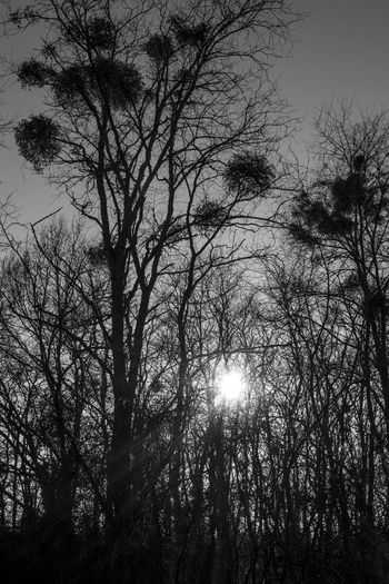 Tree Nature Landscape Naturelovers Nature Photography Beauty In Nature Landscape_Collection Landscape_photography Landscapes_captures Travel Photograpy Nature_collection Blackandwhitephoto Blackblackandwhite Landscapes Tranquil Scene Tree_collection  Treelife Tree Winter Wintewintertime Contrast